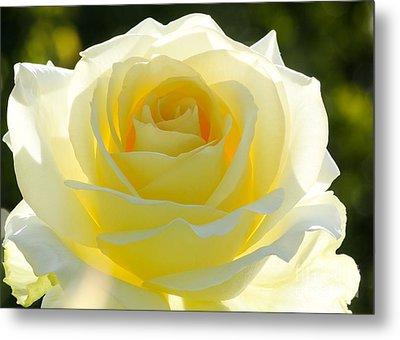 Mellow Yellow Rose Metal Print by Sabrina L Ryan