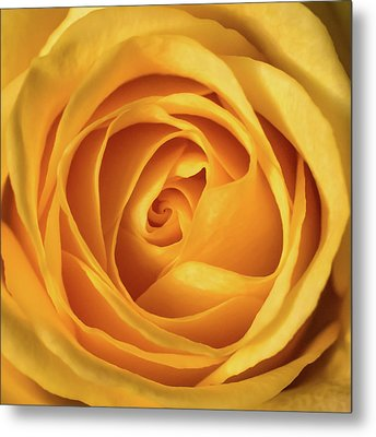 Metal Print featuring the photograph Mellow Yellow Rose Square by Terry DeLuco