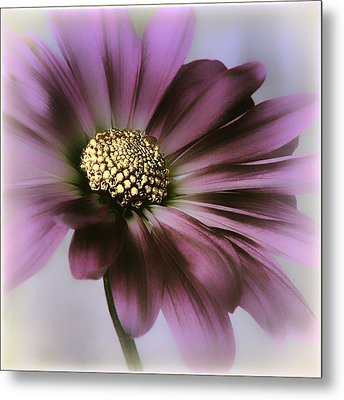 Metal Print featuring the photograph Memories Of Spring by Darlene Kwiatkowski