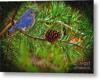 Merry Christmas Card With Bluebird Metal Print