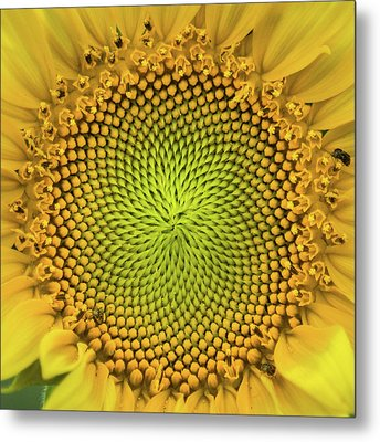 Metal Print featuring the photograph Mesmerizing by Bill Pevlor