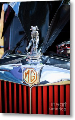 Metal Print featuring the photograph Mg Fool by Chris Dutton