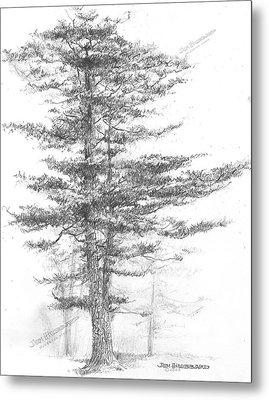 Michigan-eastern White Pine Metal Print