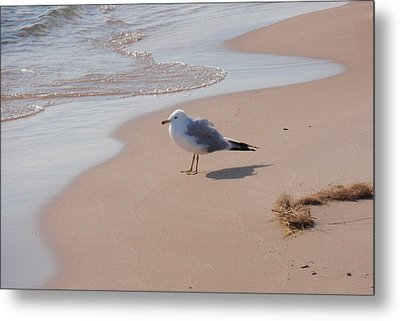 Metal Print featuring the photograph Michigan Seagull  by Beth Akerman