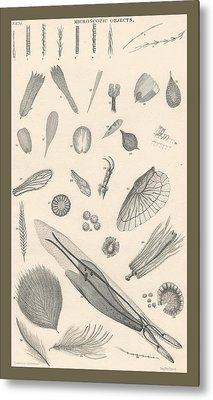 Microscopic Objects Metal Print by Dreyer Wildlife Print Collections