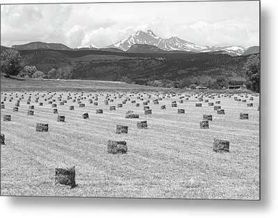 Mid June Colorado Hay  And The Twin Peaks Longs And Meeker Bw Metal Print by James BO  Insogna