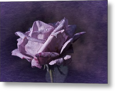 Metal Print featuring the photograph Mid September Purple Rose by Richard Cummings