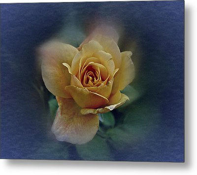 Metal Print featuring the photograph Mid September Rose by Richard Cummings