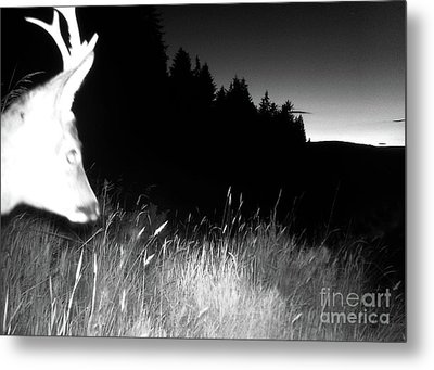 Mid Summer Night In The Forest Metal Print