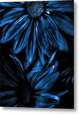 Midnight Blue Gerberas Metal Print by Bonnie Bruno