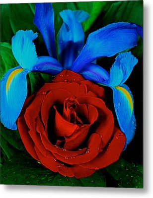 Midnight Blue Iris And A Red Rose Metal Print by Leslie Crotty