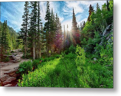 Midsummer Dream Metal Print by David Chandler