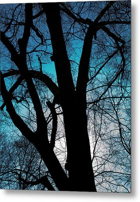 Might Oak 16x20 Metal Print