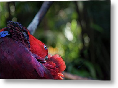 Metal Print featuring the photograph Miksang 4 Parrot by Theresa Tahara