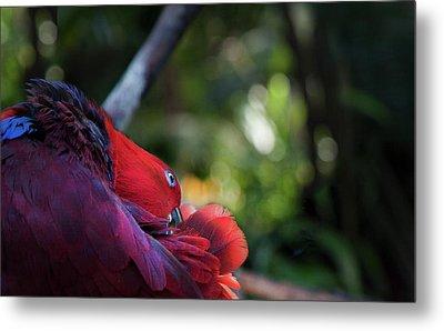Miksang 4 Parrot Metal Print by Theresa Tahara
