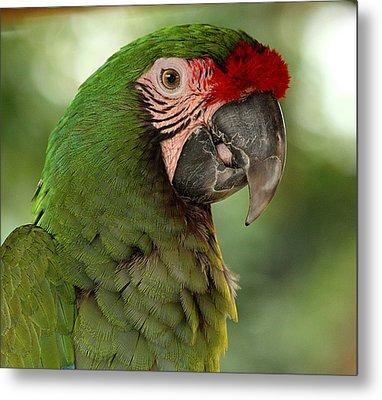 Military Macaw Metal Print