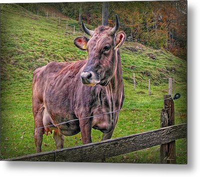 Milk Chocolate Basic Supplier Metal Print by Hanny Heim