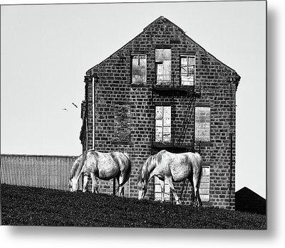 Milltown Horses Metal Print by Philip Openshaw