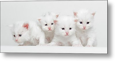 Milky Collection Metal Print