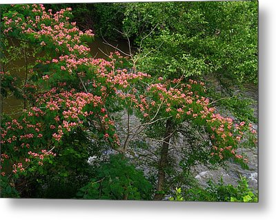 Mimosa On The Dan River Metal Print by Kathryn Meyer