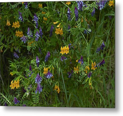 Mimulus And Vetch Metal Print by Doug Herr