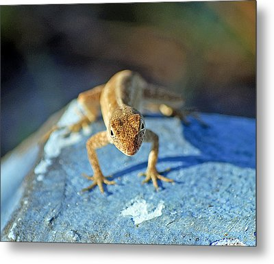 Mini Attitude Metal Print by Kenneth Albin