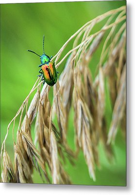 Metal Print featuring the photograph Mini Metallic Magnificence  by Bill Pevlor