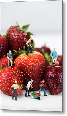 Miniature Construction Workers On Strawberries Metal Print