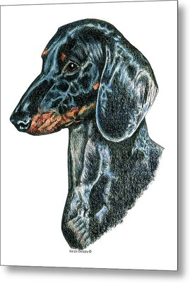 Miniature, Mini, Dachshund, Smooth Metal Print