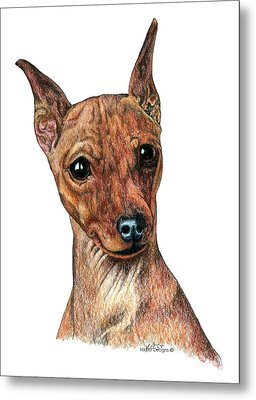 Miniature Pinscher, Min Pin Metal Print