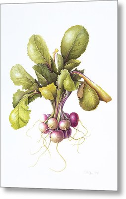 Miniature Turnips Metal Print by Margaret Ann Eden
