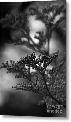 Mirrored In Sterling Metal Print