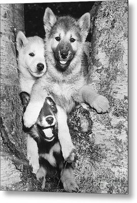 Mischievous Pups Metal Print by M E Browning