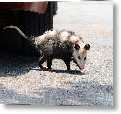 Missed Me Metal Print by Al Powell Photography USA