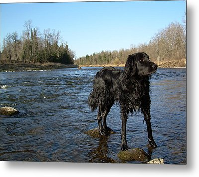 Metal Print featuring the photograph Mississippi River Dog On The Rocks by Kent Lorentzen