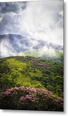 Rhododendrons - Roan Mountain Metal Print