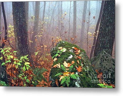 Misty Autumn Woodland Metal Print by Thomas R Fletcher