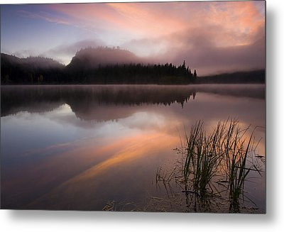 Misty Dawn Metal Print by Mike  Dawson