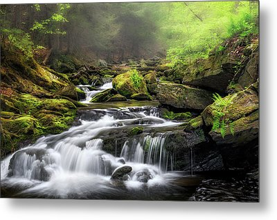 Misty Forest Metal Print by Bill Wakeley