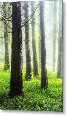 Misty Forest Metal Print by Carlos Caetano
