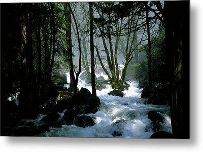 Misty Forest Metal Print by Joe Darin