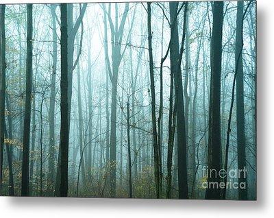 Misty Forest Metal Print by John Greim