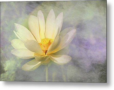 Metal Print featuring the photograph Misty Lotus by Carolyn Dalessandro