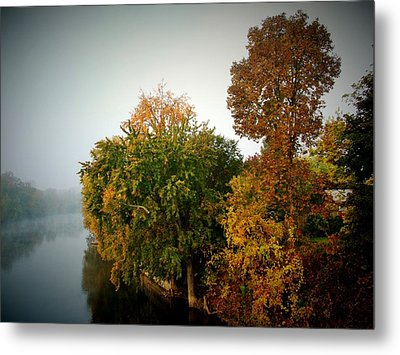 Misty Morning Shoreline Trees Metal Print by Rory Cubel