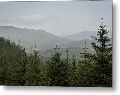 Misty Pine Forests Metal Print