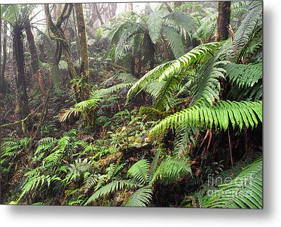 Misty Rainforest El Yunque Metal Print by Thomas R Fletcher