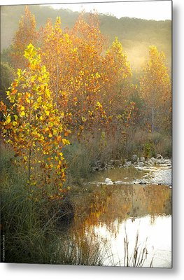 Misty Sunrise At Lost Maples State Park Metal Print