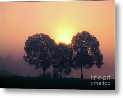 Misty Trees Metal Print