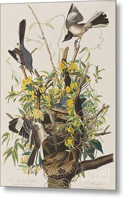 Mocking Bird  Metal Print by John James Audubon