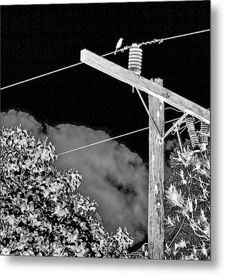 Mockingbird On A Wire Metal Print